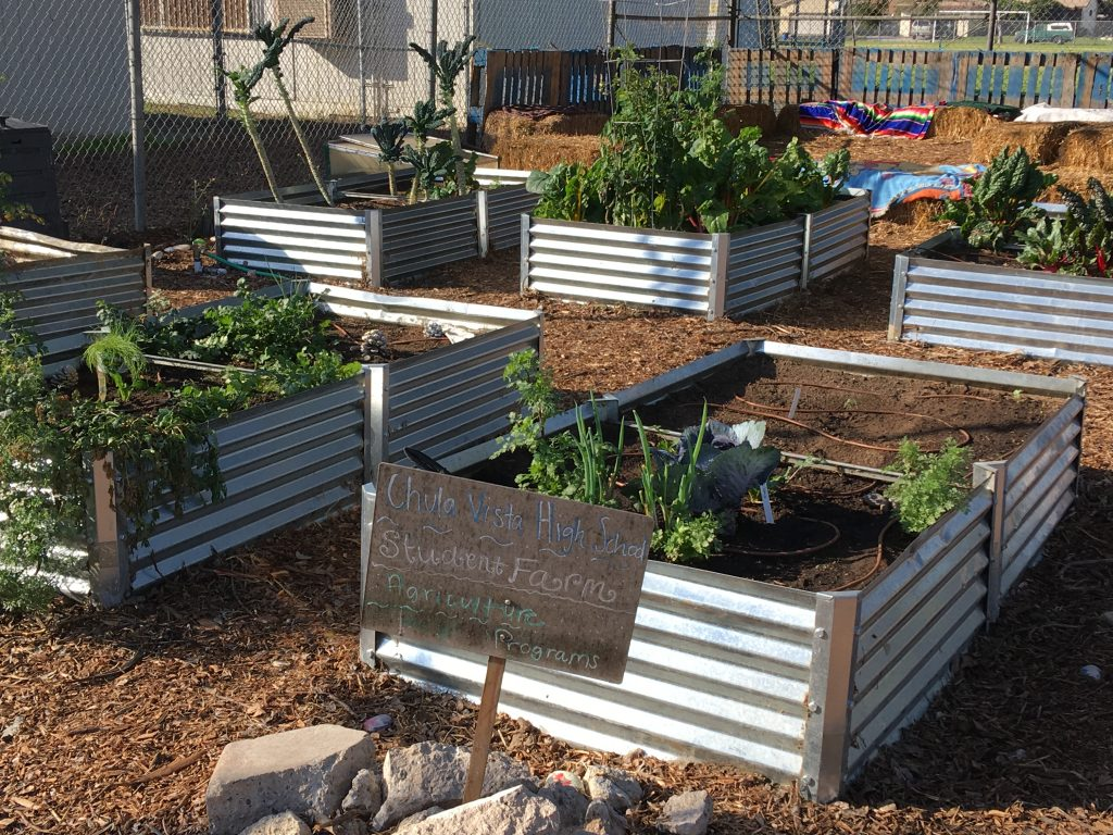 Chula Vista High School garden boxes