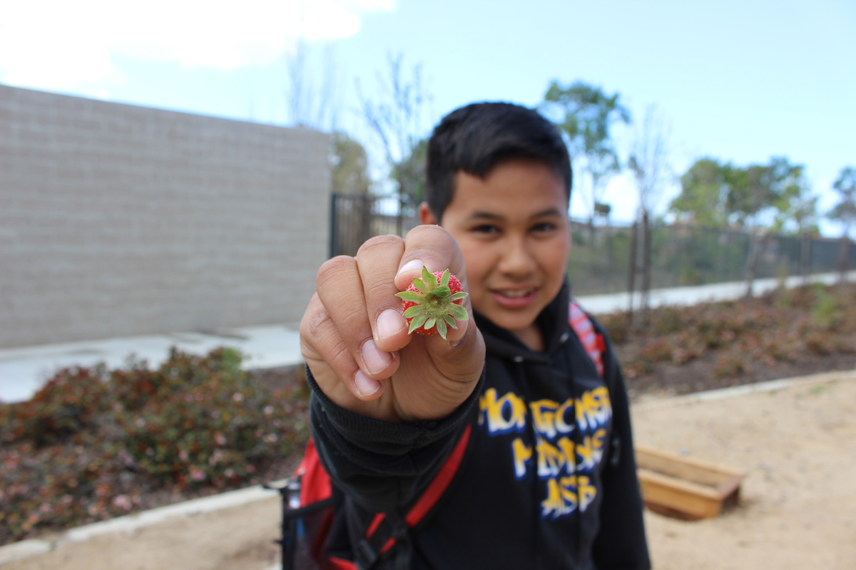 Student holding strawberry